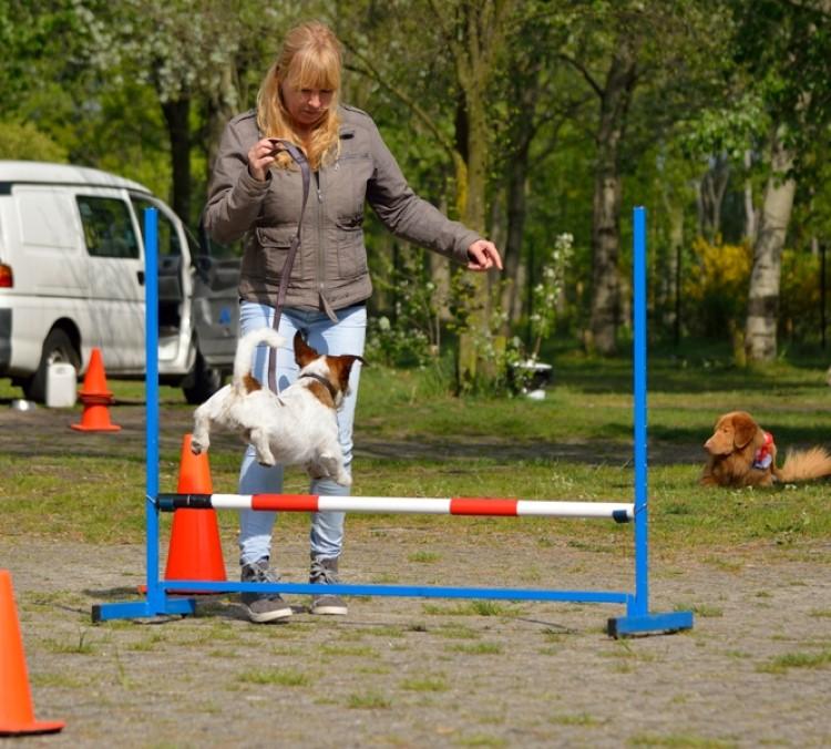 Hondencursus Den Haag